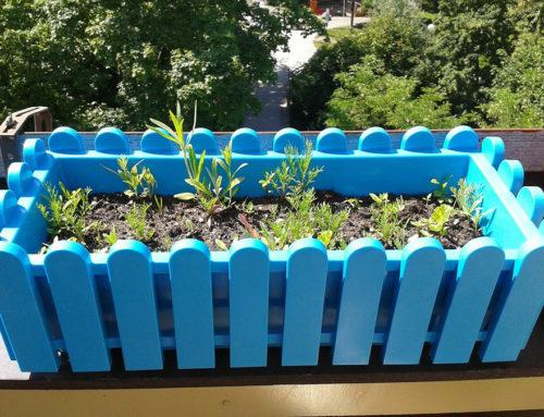 Kräuter auf dem Balkon – Das Aroma des Sommers